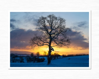 Lone Tree in Snow, Landscape Photography Print, Boundary, Staffordshire