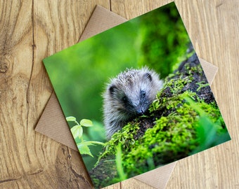 "Hedgehog Card, Hedgehog Greeting Card, blank inside, 6"" x 6""."