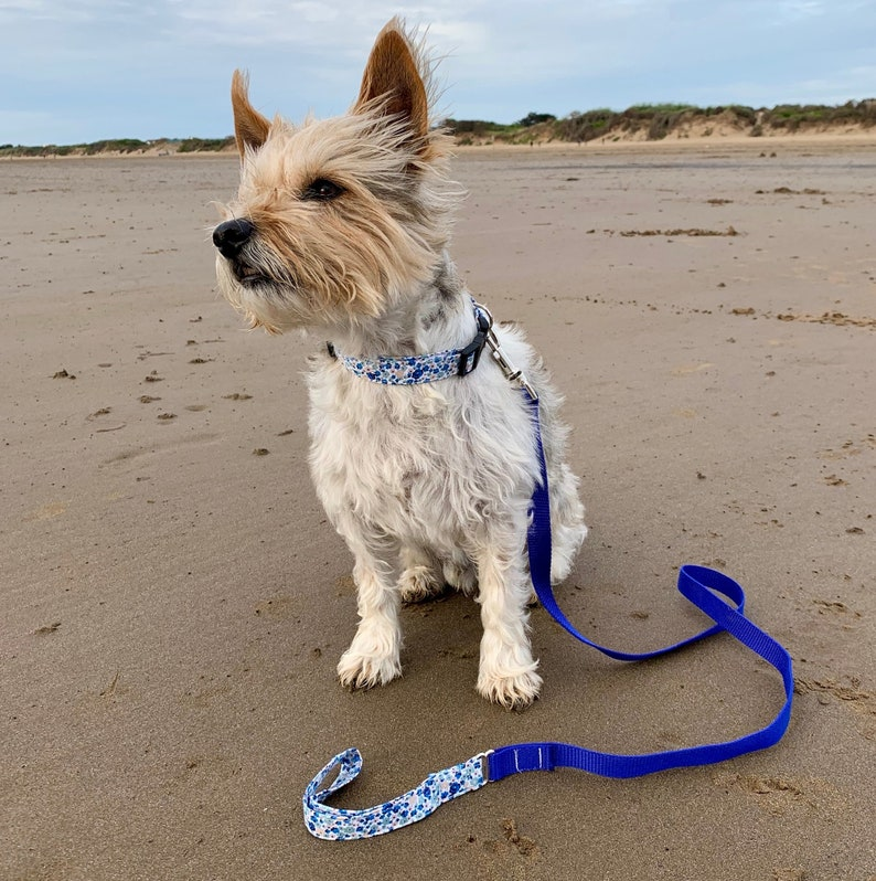 Dog Lead Ditsy Blue Floral Fabric Fabric dog lead