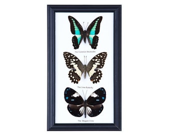 Entomology Frames