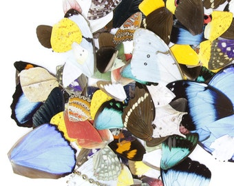 100 Loose Butterfly Wings - Assorted, Ethical Butterflies for Artistic Creation