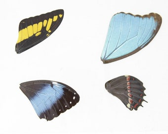 Laminated Sheet of Real Butterfly Wings | A5 Glossy 80 mic 154 x 216mm #AW2