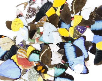 50 Loose Butterfly Wings - Assorted, Ethical Butterflies for Artistic Creation