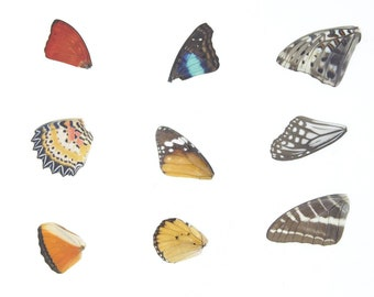 Laminated Sheet of Real Butterfly Wings | A5 Glossy 80 mic 154 x 216mm #AW7