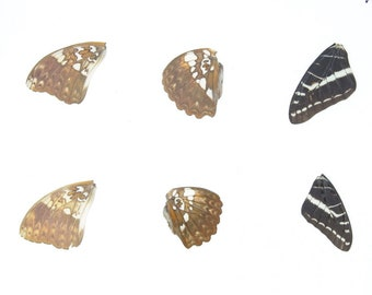 Laminated Sheet of Real Butterfly Wings | A5 Glossy 80 mic 154 x 216mm #AW8