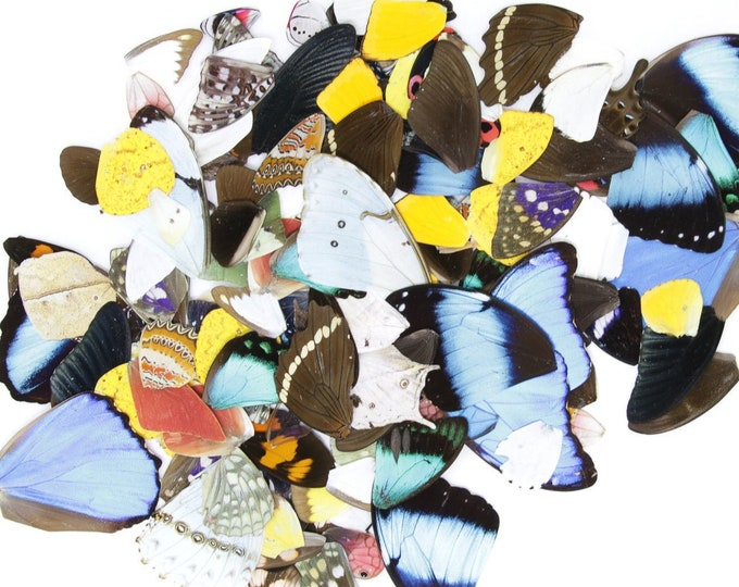 Featured listing image: 25 Loose Butterfly Wings A1, Various Assorted, Ethical Butterflies for Artistic Creation