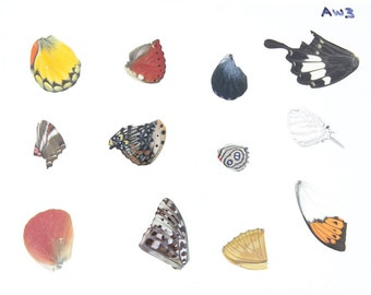 Laminated Sheet of Real Butterfly Wings | A5 Glossy 80 mic 154 x 216mm #AW3