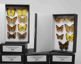 A box of 8 pinned BRITISH Butterflies, Various English LEPIDOPTERA Dry-Preserved Mounted Specimens