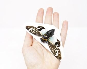 Two (2) Blue Cicada Specimens | Tosena splendida 100mm A1 | Entomology Taxidermy Artistic