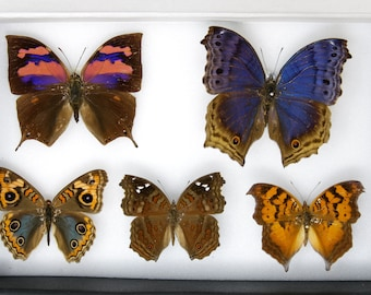 A Boxed Collection of Pretty Vintage Butterflies | Dry-Preserved Pinned Specimens | Free Shipping