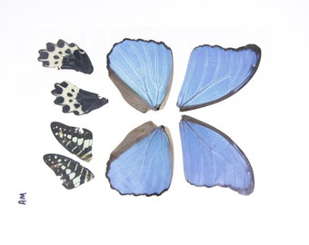 Laminated Sheet of Real Butterfly Wings | A5 Glossy 80 mic 154 x 216mm