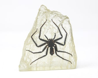 Hunting Spider Resin Acrylic Paperweight Ornament 116g 9 x 8 cm