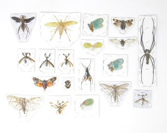 Mixed Pack of Insect Specimens | Assorted Unmounted Invertebrates & Taxidermied Bugs