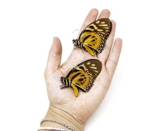 2 x The Orange Mimic-Swallowtail, Papilio zagreus A1, Unmounted Papered Butterflies, Entomology Specimens