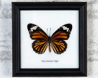 The Common T i g e r Butterfly (Danaus genutia) Real Butterfly Mounted Under Glass, Wall Hanging Home Décor Framed 5 x 5 In. Gift Boxed
