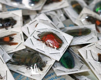 Unmounted Insects