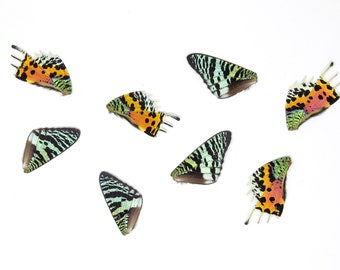 8 Madagascan Sunset Moth Wings   Chrysiridia rhipheus   Loose Butterfly Wings for Art