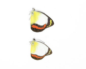 Sexed Pair of Delias mysis lara, Dry-Preserved Lepidoptera Butterflies Specimens, Entomology Dried Butterfly Taxidermy