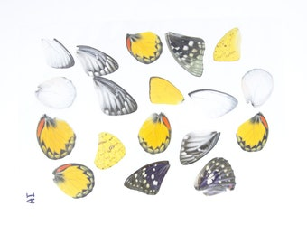 Laminated Butterfly Wings   A5 Glossy 80 mic 154 x 216mm   Various Colourful Butterflies Sizes   Ideal for Jewellery making and crafts
