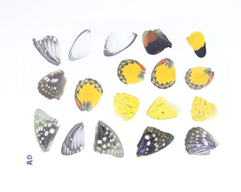 Laminated Sheet of Real Butterfly Wings   A5 Glossy 80 mic 154 x 216mm
