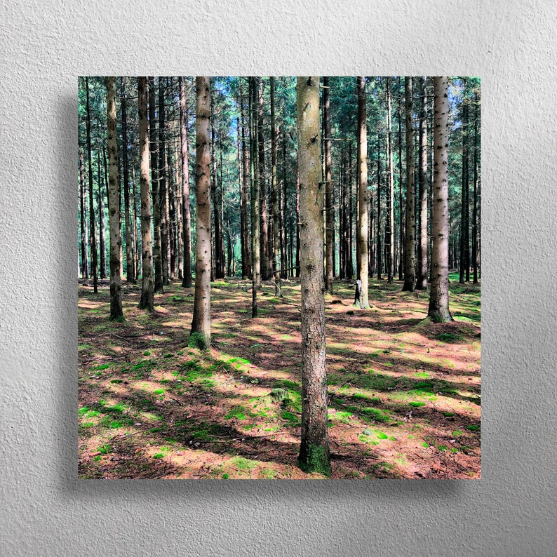 ZAUBERWALD 40 x 40 cm square wall photo for kitchen living image 0