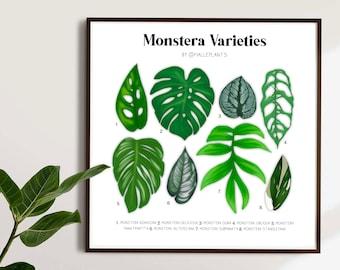 Monstera Varieties - Plant Identification Chart - Digital Download