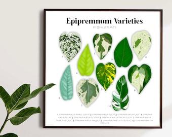 Epipremnum Varieties - Plant Identification Diagram - Digital Download