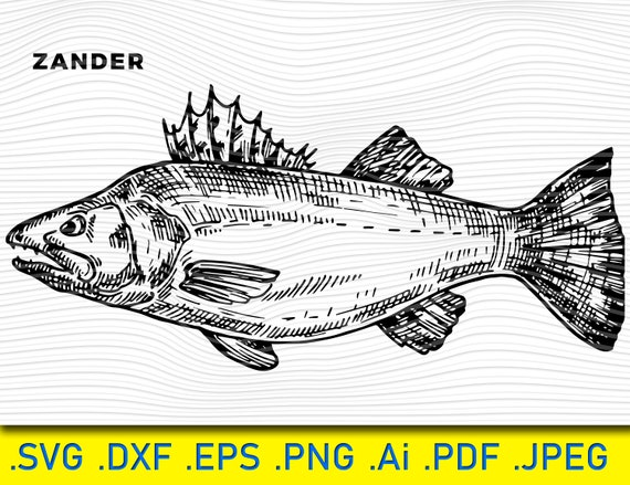 Download Realistic Fish Walleye Svg Zander Svg Fishing Svg Fish Etsy
