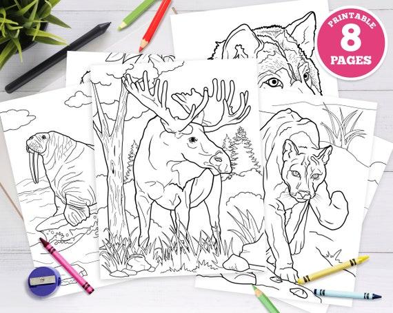 8 pack  Printable Digital Coloring Pages for Kids. Alaska