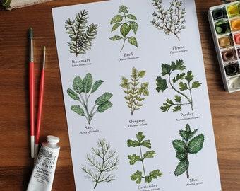 Watercolour Culinary Herb Wall print A4, herb print, Botanical print, kitchen herbs print, kitchen print, Wall prints, kitchen wall art