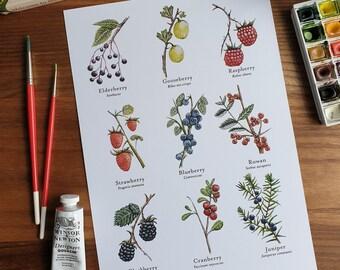 Watercolour Berries Print A4, Botanical Berries print, Watercolour Art, Botanical Berries, Illustrated Berries Fruit, Nature, Art Print