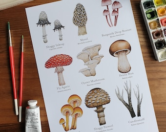 Watercolour Funghi & Mushrooms Print A4, Microbiology Print, Mushroom Identification, Mushroom Poster, Nature Print
