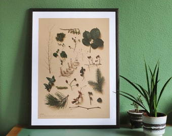 Wild Plants Poster A2   100% recycled paper   With labeling