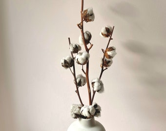 30 echte Baumwollblüten getrocknet Natur Baumwolle Deko