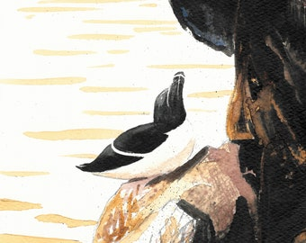 Razorbill greetings card. Square 12x12cm. Blank inside. Seabird. Scotland. Islands. landscape painting. 100% recycled card. Isle of May.