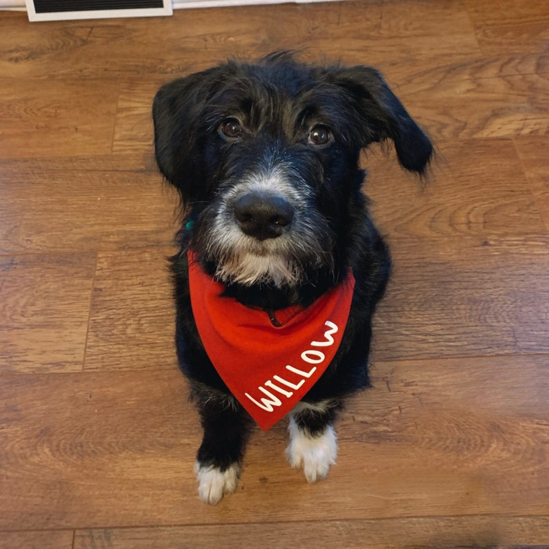 Name ADD-ON for personalised dog bandanas