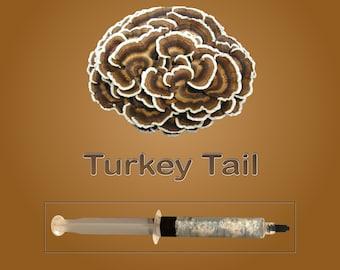 Turkey Tail Mushroom Liquid Culture