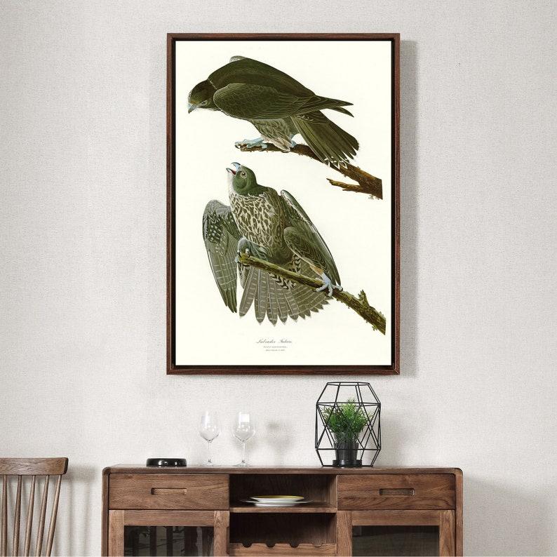 John James Audubon,Labrador Falcon,The Birds of America,canvas print,canvas art,canvas wall art,large wall art,framed wall art,p2401