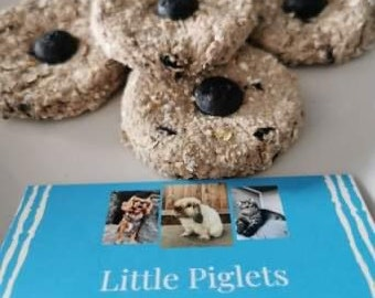 Blueberry Dodgers Blueberry Treats for Rabbits and Guinea Pigs