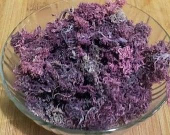 Jamaican Wildcrafted Purple Irish moss, Chondrus Crispus, Real sea moss,  Bulk Sea moss