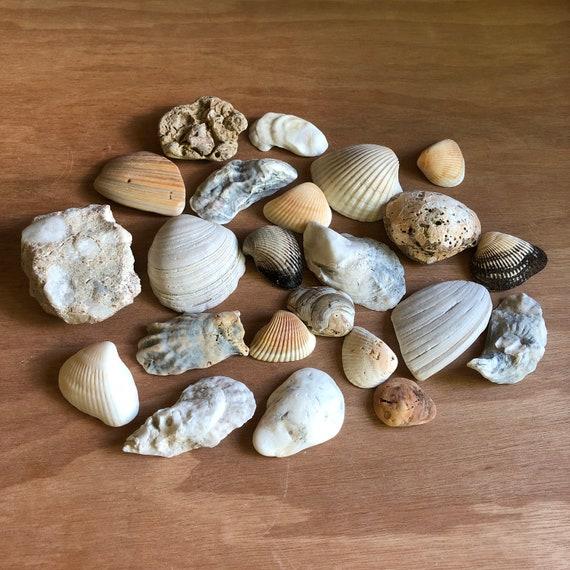 Vintage Seashells/Beach Oddities Collection