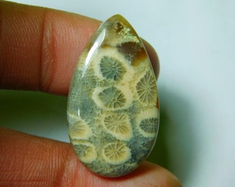 Large Fossil Coral cabochon 48x30mm big size oval cabochon gems