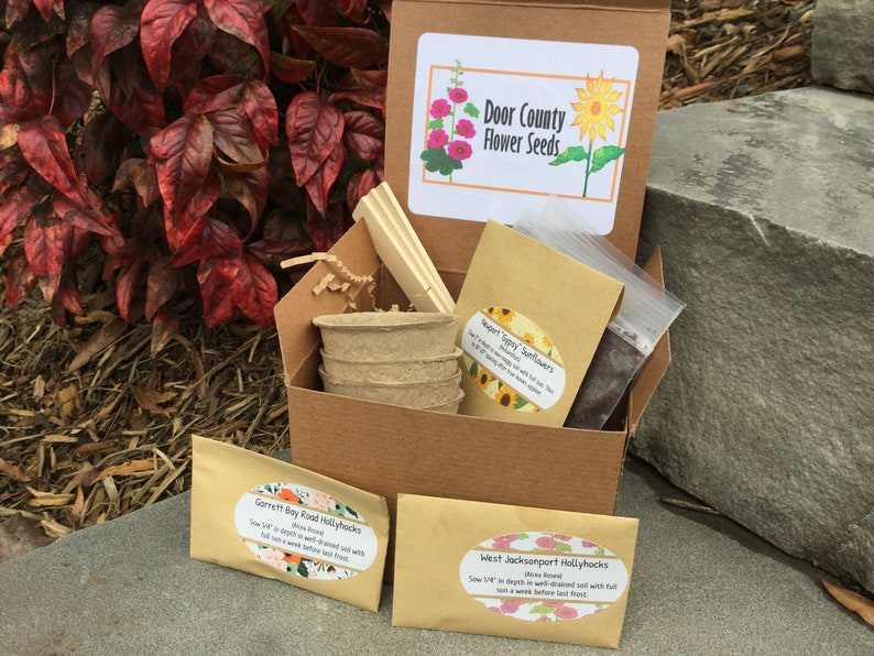 Door County Cottage Hollyhocks and  Sunflowers Seed Kit