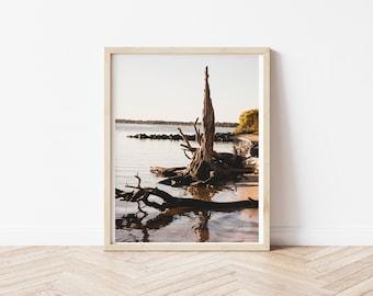 Drift Wood Print