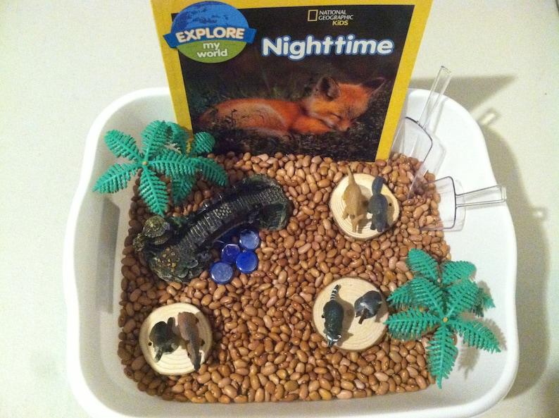 Gifts for Children Montessori Play Bin Small World Pretend Play Sensory Play Bin Nighttime Animals/_Nocturnal Animals