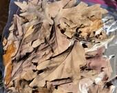 1 Gallon Bag Oak Leaf Litter Dart Frog Reptile Isopod Terrarium Leaves