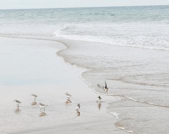 Piping Plovers Nauset Beach Cape Cod Photo Print, Un-Framed Photo, Bird Lover Gift, Wildlife Photography, Coastal Decor, Beach Bird Wall Art