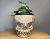 """Skeleton (named """"Scully"""" Hand made to order, unique sculpture on a terracotta planter    pick a 9cm 11cm or 17cm pots"""