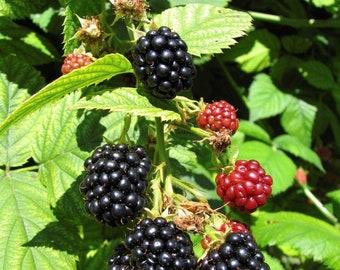 Blackberry Pitcher with Black Luster Rim