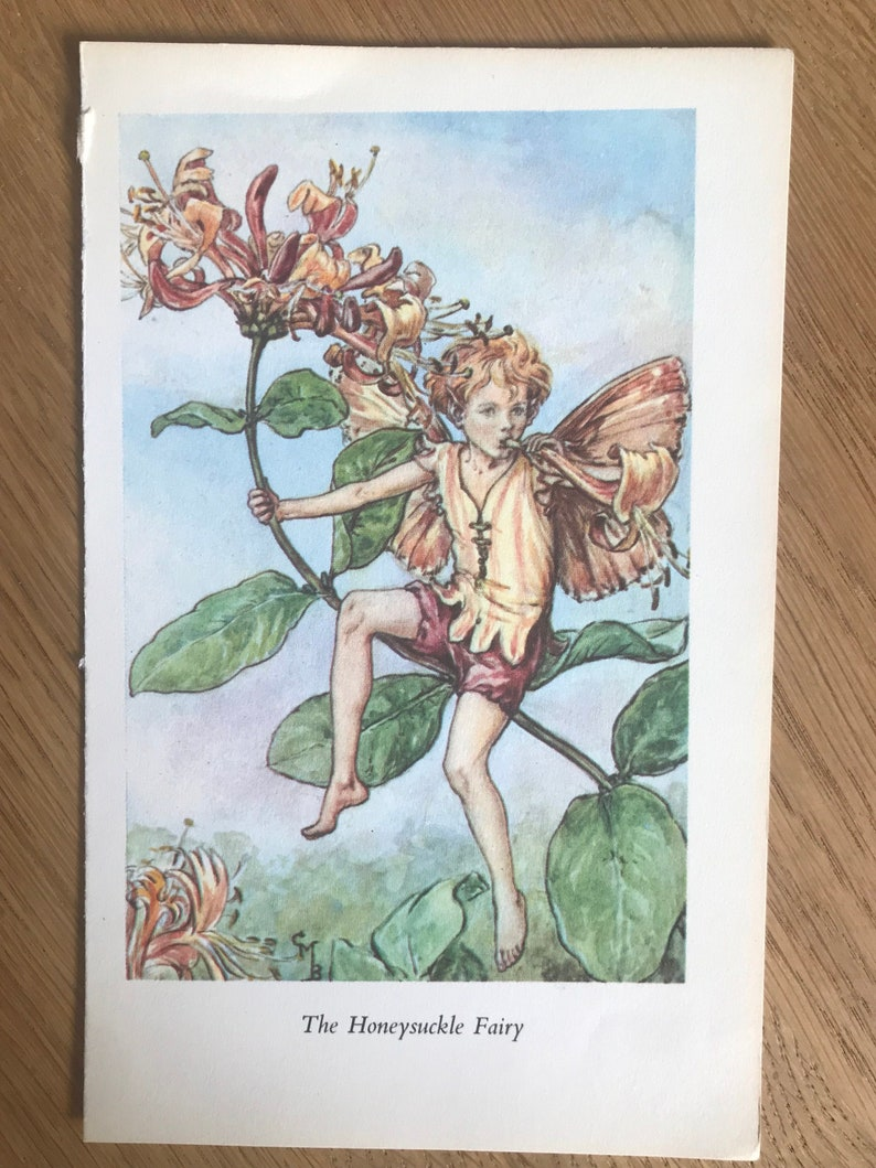 The Honeysuckle Fairy by Cicely Mary Barker Rescued illustration from /'Flower fairies of the Summer/' 1974 edition vintage illustration